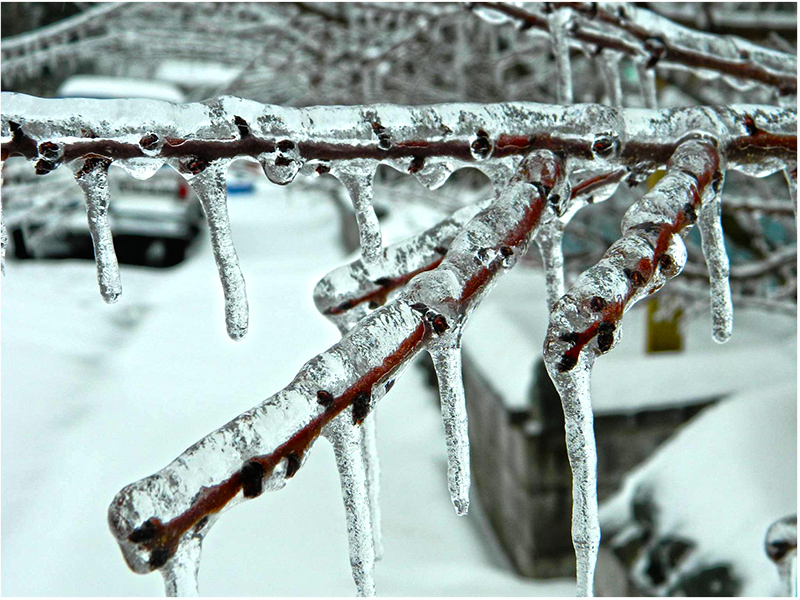 ice-covered branch