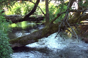 Regulatory image of trees over a creek