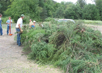 Members of the Upper Rogue Watershed Association and the Oregon Hunters Association worked diligently to pull the invasive species Scotch broom from important fish and big game habitat in the fields and banks of Elk Creek.