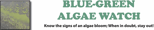 Extract from Corps' blue-green algae poster