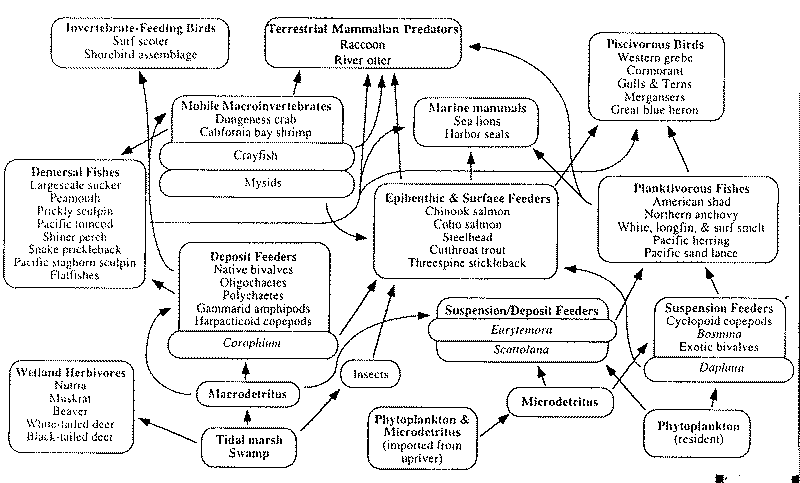 Chart showing interrelationship factors of other fish production