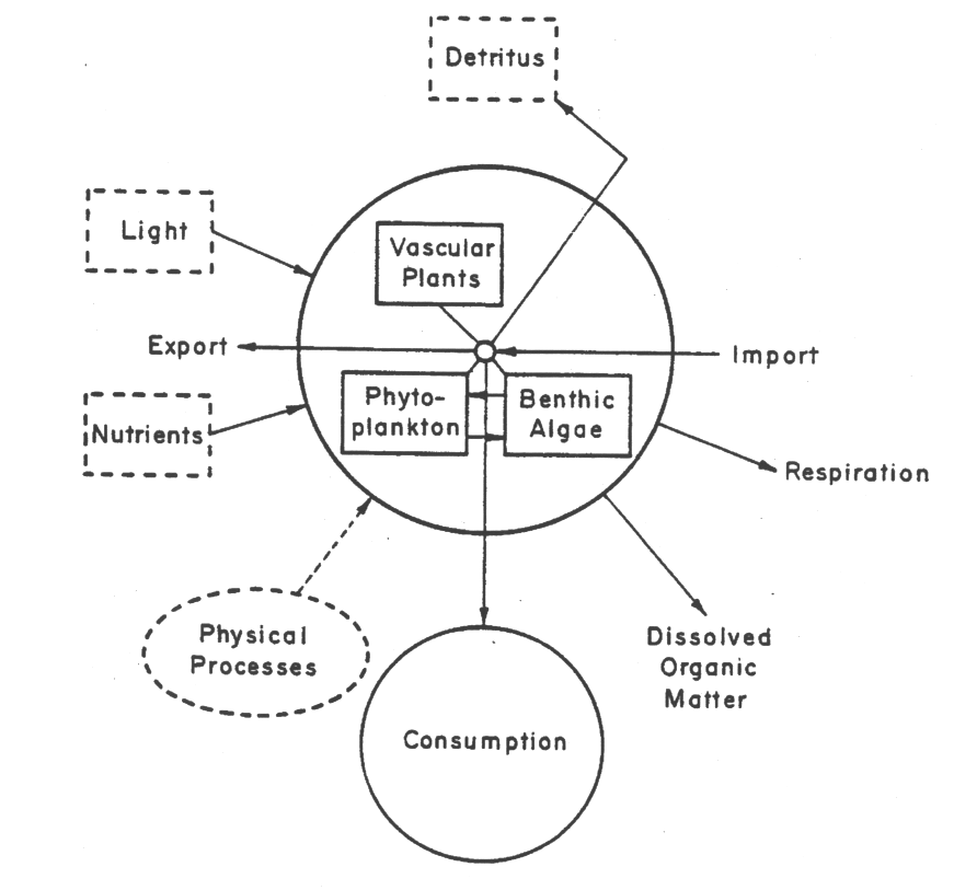 Primary production diagram