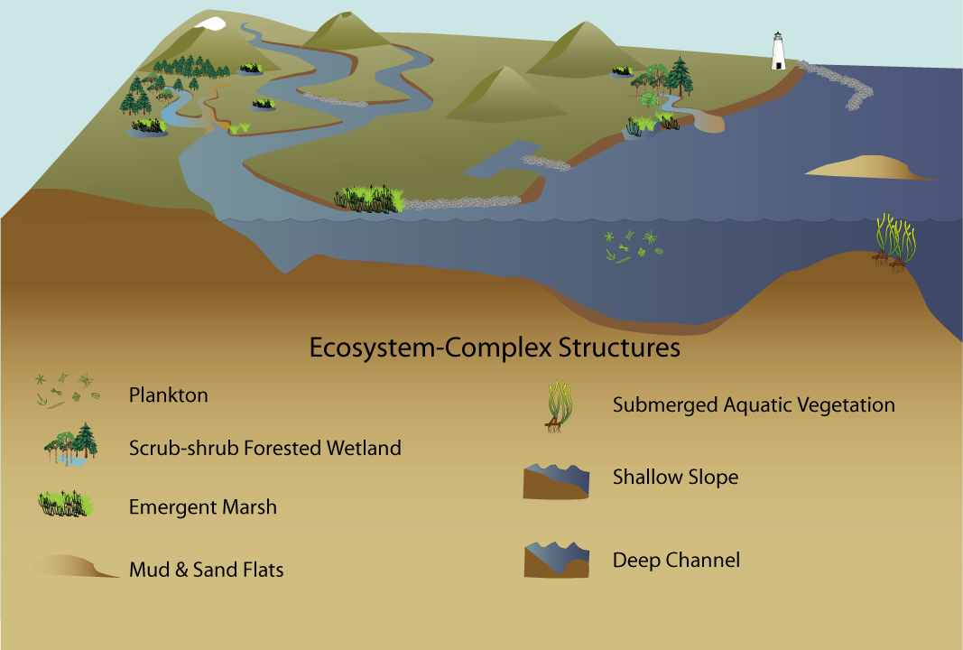Structure Of The Ecosystem Complex Estuary